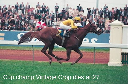 Cup champ Vintage Crop dies at 27